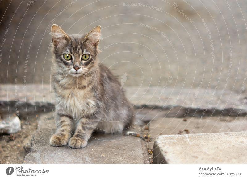 Straße kleine Katze Räuber Pfoten Schnurrbart Bürgersteig Großstadt Porträt Tier Säugetier