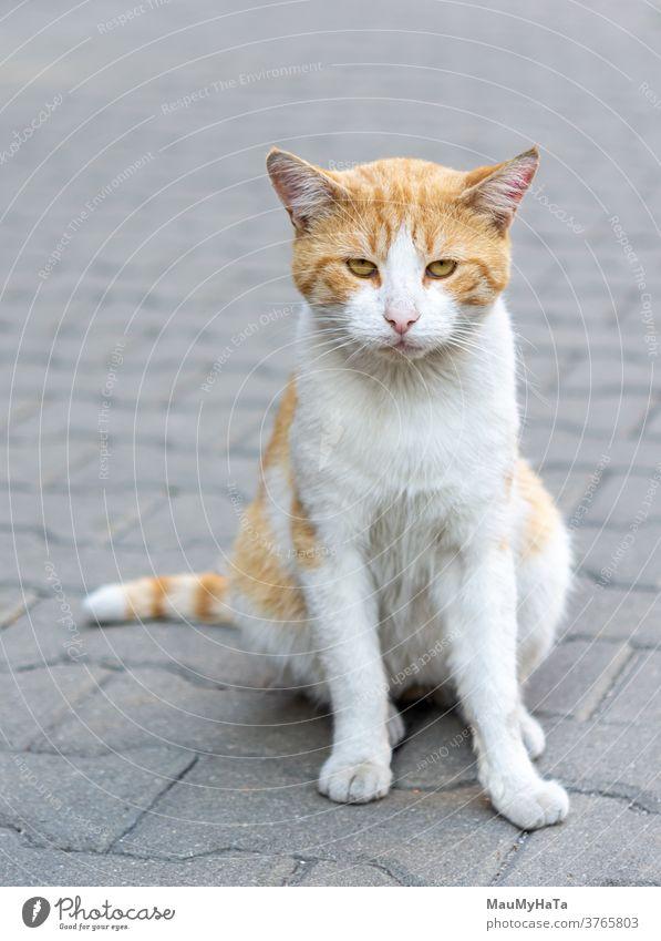 Straßenkatzenräuber Katze Räuber Pfoten Schnurrbart Bürgersteig Großstadt Porträt Tier Säugetier
