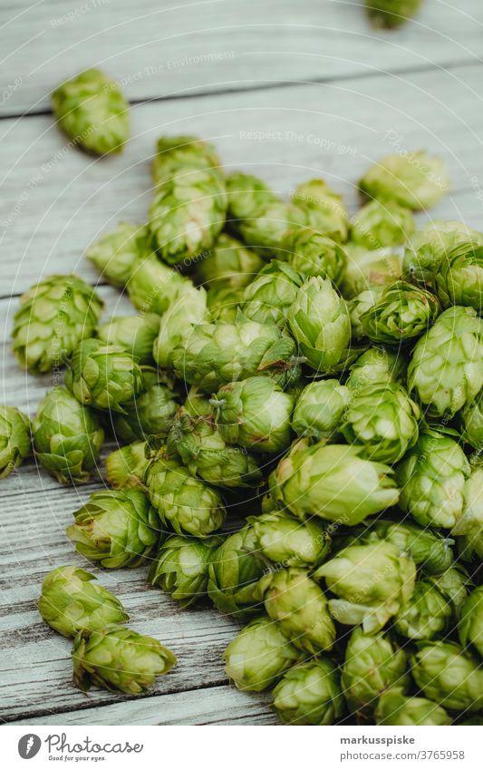 frischer Bio-Hopfen Biografie Feld Ernte Humulus agrar Ackerbau ale-brewer Bier Blütezeit züchten Zucht brauen Brauer Brauerei Brauen Brauen von Bier