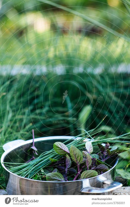 Frische Bio-Ernte Hausgartenkräuter Ackerbau Biografie Blütezeit züchten Zucht Kindheit Wintergarten kontrollierte Landwirtschaft Bodenbearbeitung Lebensmittel
