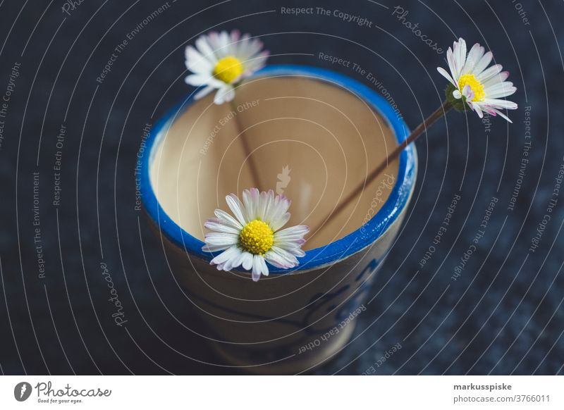 Drei Gänseblümchen schön Schönheit Farbenpracht Blütezeit Bokeh hell braun Haufen Nahaufnahme farbenfroh Landschaft Phantasie Flora geblümt Blume Blumen