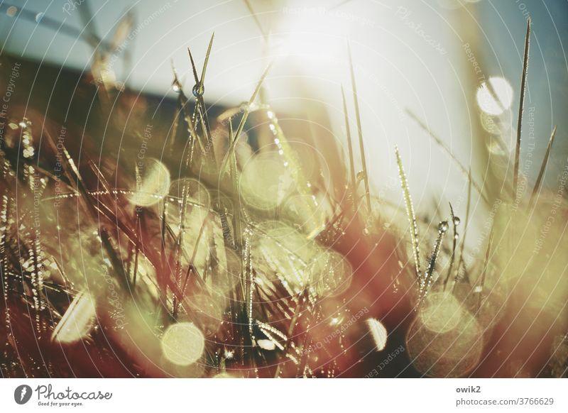 Nasses Durcheinander Außenaufnahme feucht Morgentau Pflanze Tropfen flimmern Umwelt glänzend Tau funkeln bizarr Regen Tautropfen leuchten Sonnenlicht