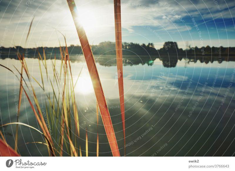 Striche in der Landschaft Weite ruhig Schönes Wetter Wolkenloser Himmel Horizont Halme Wasseroberfläche Pflanze Sonnenlicht Reflexion & Spiegelung Seeufer