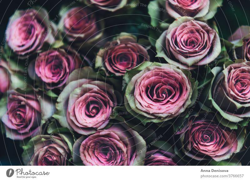 Rosenstrauß Roséwein Blume Haufen Blumenstrauß Flora Postkarte Hintergrund Natur Valentinsgruß Blütenblatt Pflanze Liebe geblümt Blütezeit Garten Hochzeit