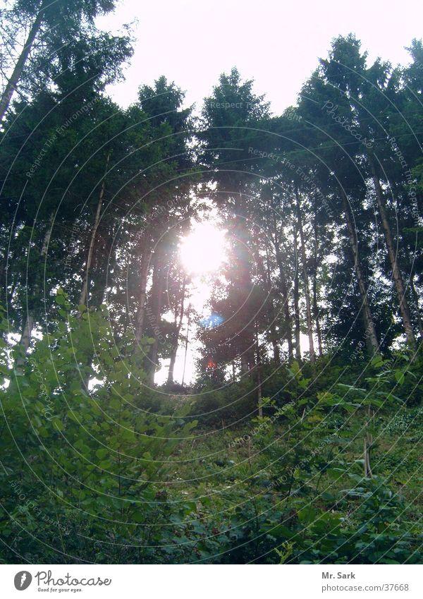 Im Schwarzwald Wald Baum Sonne Reflexion & Spiegelung Natur