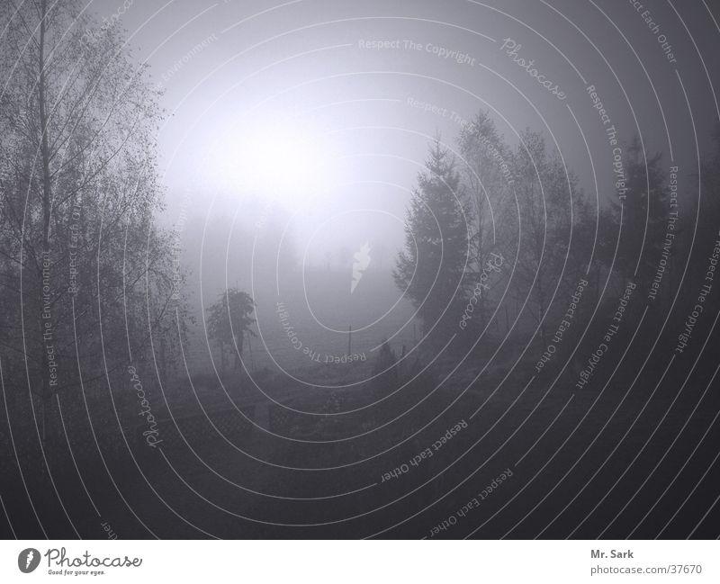Am Ende des Weges Natur Baum Feld Nebel Birke