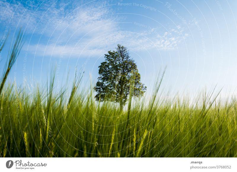 Baum Wiese Perspektive Gras Schönes Wetter 1 Natur Umwelt Einzelgänger Sommer Feld
