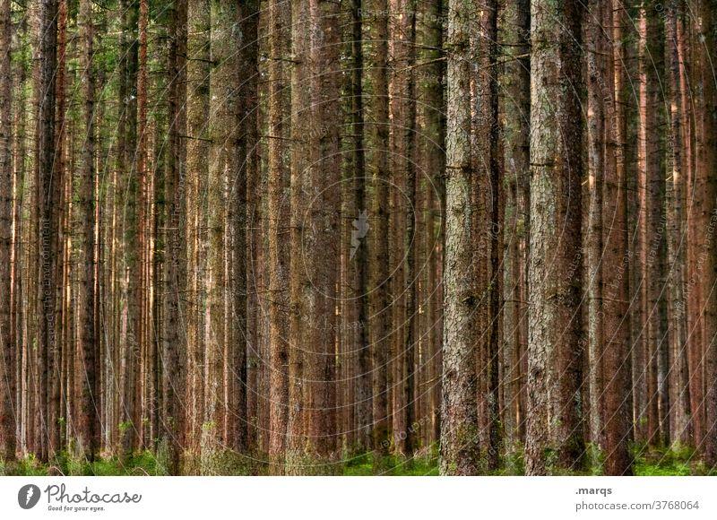 Wald Baumstamm viele Natur Doppelbelichtung Umwelt Nadelwald ruhig Erholung