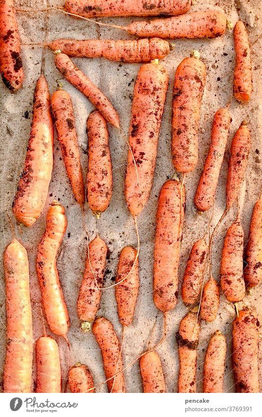lebensnotwendig | vitamine Karotten Vitamine Sand Miete Erdmiete Sandmiete orange Beta-Karotin Möhren lagern Gemüse Vegetarische Ernährung Ernte lecker