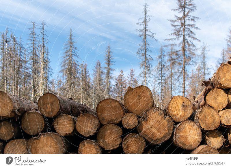 totes Holz vor totem Wald - der Borkenkäfer ist da borkenkäferbefall Waldsterben baumstämme Baumstamm Raummeter Klimawandel Forstwirtschaft Natur Umwelt