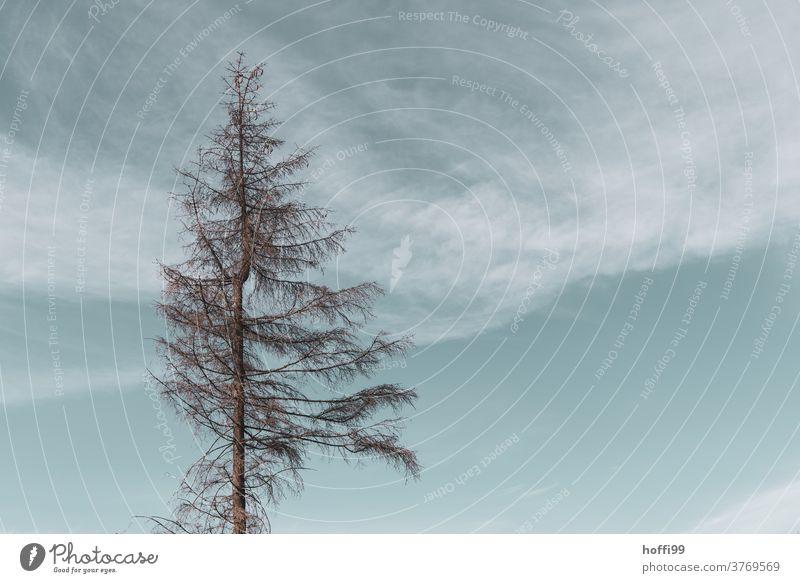 Baumkrone eines toten Baumes  - der Borkenkäfer ist da borkenkäferbefall Waldsterben Minimalismus minimalistisch Holz baumstämme Baumstamm Raummeter Klimawandel