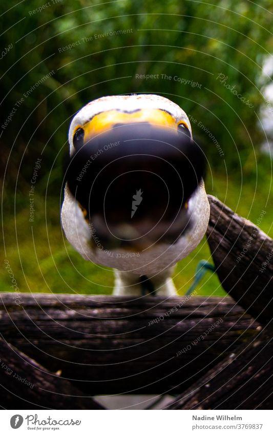 Neugieriger Schwan Vogel Tier weiß Außenaufnahme Schnabel Hals Nahaufnahme Unschärfe Tiefenunschärfe wenig tiefenschärfe Farbfoto Tierporträt Kopf