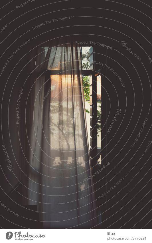 Vorhang vor Fenster durchsichtig verträumt stimmungsvoll Blick nach draußen Ausblick Stoff Gardine morgens Schatten Licht Wohnung dunkel eingerahmt Textilien