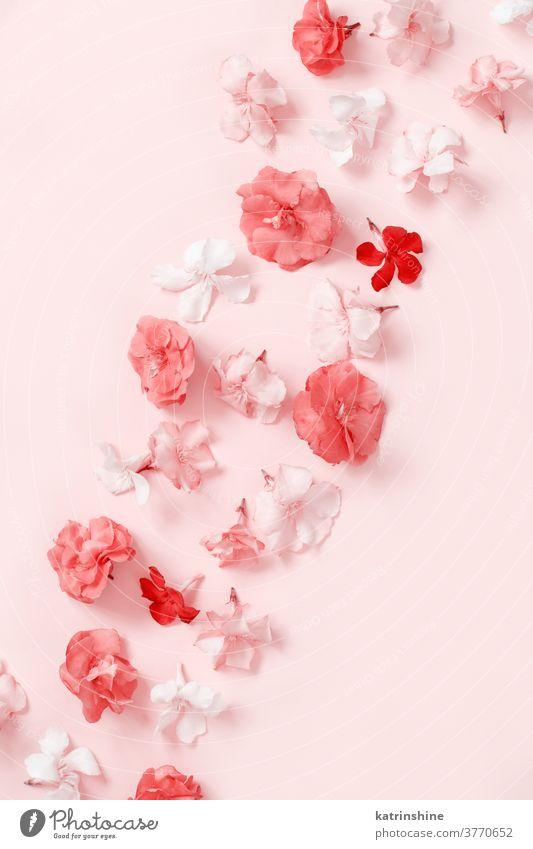 Rosa Blumen auf rosa Hintergrund - Draufsicht hellrosa Korallen Muster Monochrom Frauentag hochzeitlich Engagement Frühling oben Pastell Gruß romantisch
