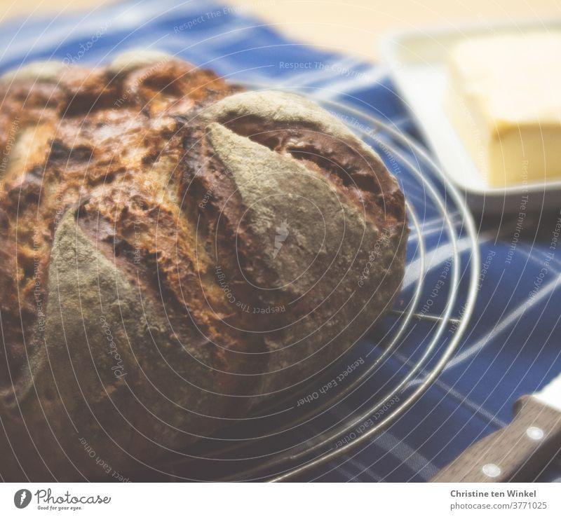 lebensnotwendig | unser täglich Brot...   frisch gebackenes Brot liegt auf einem Auskühlgitter Brotlaib frisches Brot selbstgebacken lecker duftend