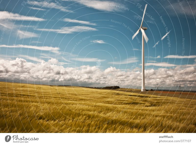 Windrad in Getreidefeld Himmel Natur blau weiß Sommer Sonne Einsamkeit ruhig Wolken gelb Horizont Feld gold Energiewirtschaft groß