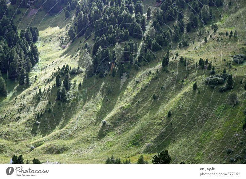 Fichtengrün Natur Landschaft Pflanze Baum Gras Nadelbaum Tanne Rasen Wiese Wald Hügel Erholung Umweltschutz Wachstum Farbfoto Außenaufnahme Menschenleer Tag