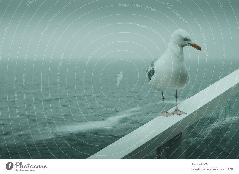 eine Möwe bei Sturm an der rauen See Unwetter Raue See Meer Ozean schlechtes Wetter Wellengang an Board grau windig Regen düster