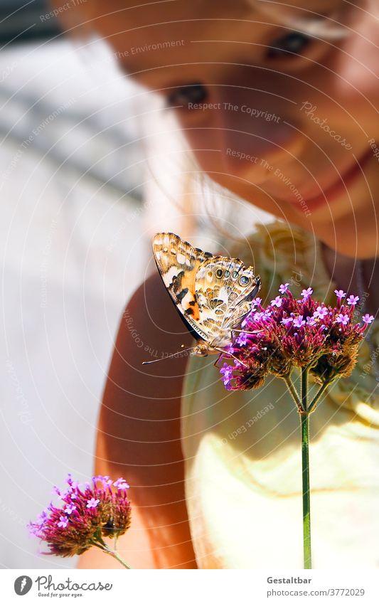 Distelfalter auf Eisenkraut, Verbena bonariensis Eisenkraut (Verbena bonariensis) mädchen Schmetterling Artenschutz insekten schützen Schutz Blumen Blüten