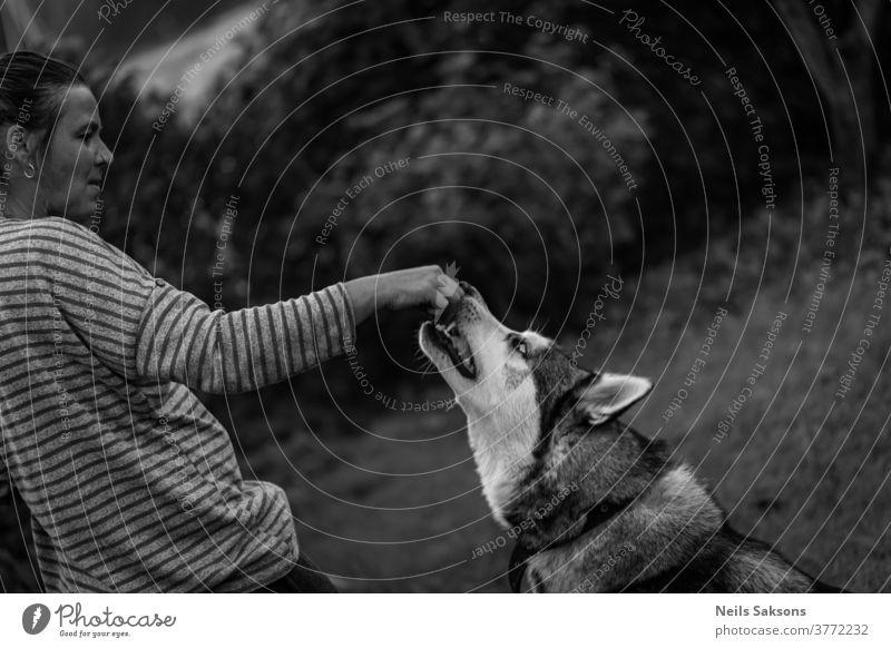 Frau gibt Husky-Hund einen Snack sibirischer Husky alusky Tier füttern Leckerbissen Hand Außenaufnahme Schlittenhund Tierporträt Haustier jung Tag Rassehund