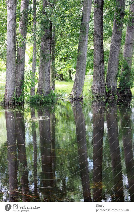 Wassergrundstück. Natur Landschaft Pflanze Baum Garten Park Wiese Brandenburg an der Havel Menschenleer Erholung träumen frisch nass Sauberkeit grün ästhetisch