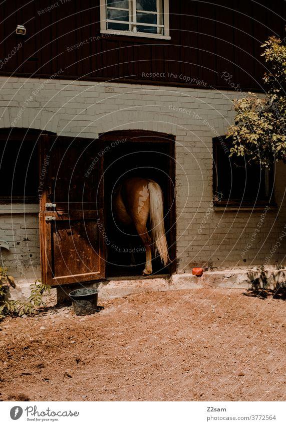 Pferd seht im Stall pferd stall pferdestall landleben reiten reitpferd tor tür haus sommer sonne wärme hintern hinterteil schwanz natur bäume grün ländlich