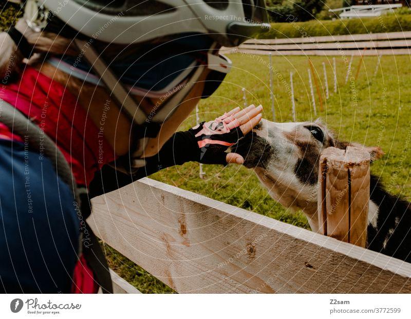 Radfahrerin streichelt Esel in einem Streichelzoo radfahrer radfahrerin radtour frau weiblich mädchen ausflug natur wiese streichelzoo tier esel liebe zuneigung