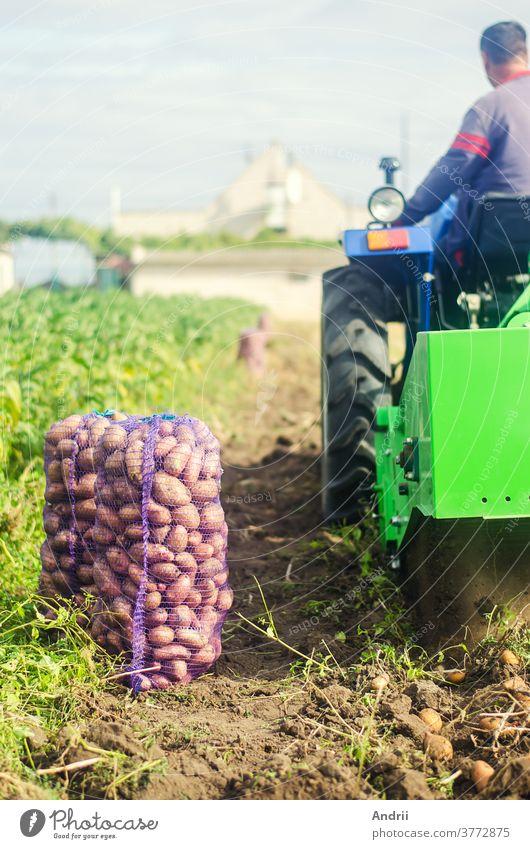 Landwirt auf einem Traktor gräbt Kartoffeln vom Boden aus. Extrahiert Wurzelgemüse an die Oberfläche. Landwirtschaft. Ernten von Kartoffeln im Herbst. Kartoffelernte-Kampagne. Ackerland auf dem Land.