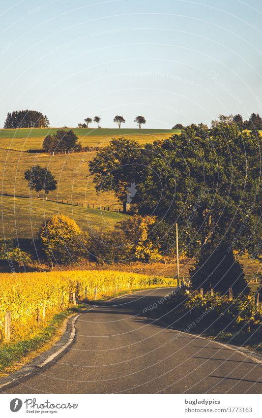 Landschaft im Sommer mit einer Straße die Richtung Bildmitte verläuft. Im Bild sind außerdem einige Bäume und am Horizont eine kleine Allee. Linker Hand ist ein reifes Maisfeld.
