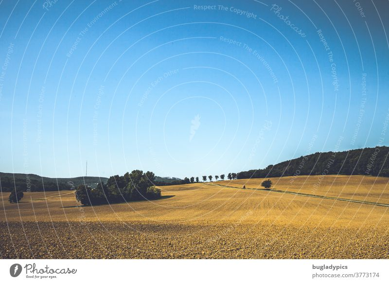 Stoppelfeld/leeres Feld mit einer Baumgruppe und Bäumen und einer Allee im Hintergrund. Der Himmel ist blau und wolkenlos. Stroh Ernte Erntezeit Sommer Herbst
