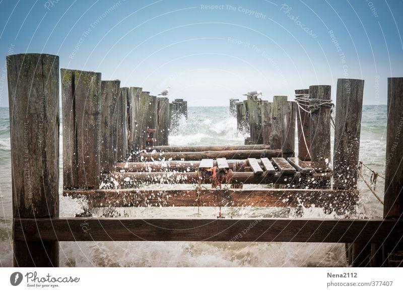 Unruhe Natur blau Wasser Meer Erholung Landschaft Umwelt Küste Holz Horizont braun Vogel Wellen Schönes Wetter nass gefährlich