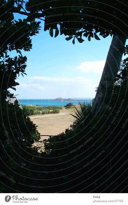 Fenster zum Meer Baum Strand Ferien & Urlaub & Reisen Wolken Sand Küste Aussicht