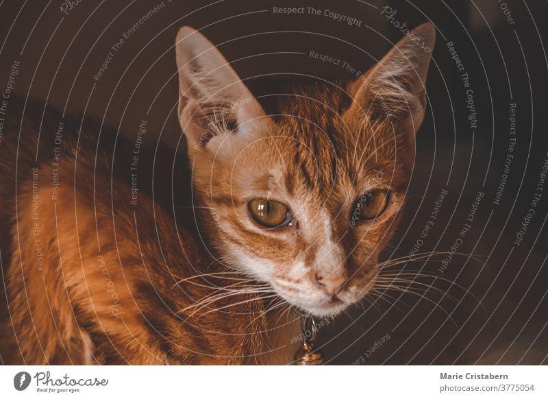 Dunkles und launisches Katzenporträt in Herbstfarben und Thema dunkel und launisch bezaubernd Tier vom Herbst inspiriert Herbst-Vibes schön Windstille