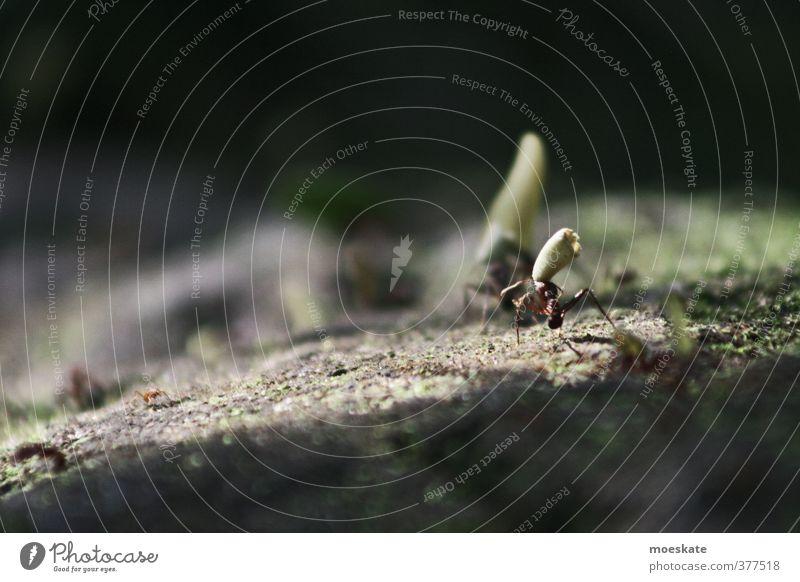 Arbeit in der Natur Ameise Arbeit & Erwerbstätigkeit tragen fleißig klein Wald Güterverkehr & Logistik Tier Ameisenstraße Gedeckte Farben Außenaufnahme