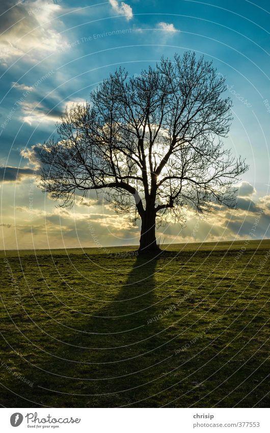 Baum im Abendlicht Umwelt Natur Landschaft Himmel Wolken Sonne Sonnenaufgang Sonnenuntergang Sonnenlicht Frühling Herbst Schönes Wetter Pflanze Gras Wiese Feld