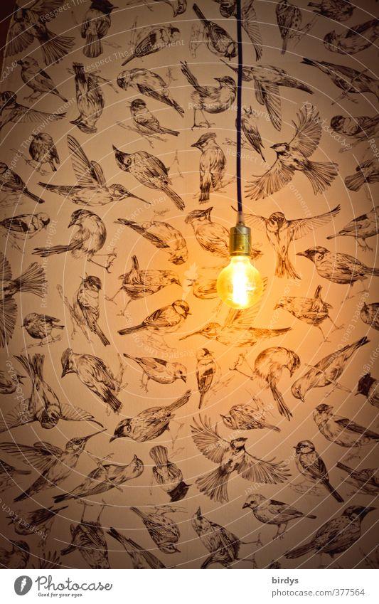 """Ambiente Lifestyle leuchten ästhetisch dunkel bescheiden Design Idee Kreativität Stil """"Lampe Licht Glühbirne Erleuchtung Vogel Vögel Tapete Lichtblick Idee,"""""""
