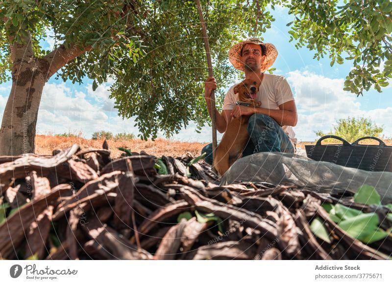 Mann mit Hund sitzt in der Nähe von Johannisbrotbaum Landwirt Ernte kleben Hülse reif abholen Baum Arbeit Pflanze Arbeiter Saison Ackerbau organisch frisch