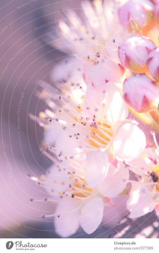 noch ne Blume Natur schön Sommer Pflanze Blume ruhig Blatt Umwelt Wärme Blüte natürlich Garten hell rosa Park leuchten