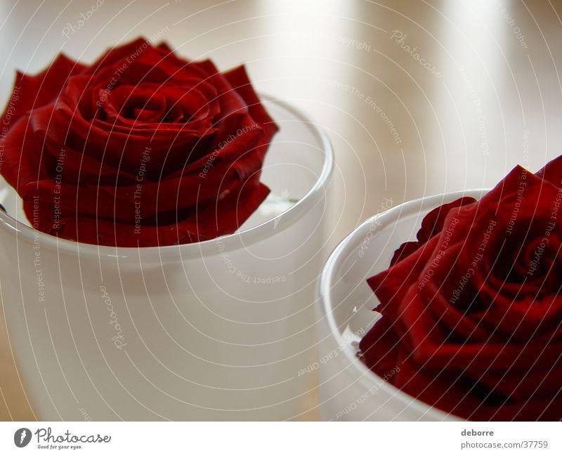 Zwei rote Rosen in weißen Glasvasen auf einem verschwommenen Holztisch. Roséwein Blume Muttertag Vase Valentinstag Gefühle Dekoration & Verzierung Wasser