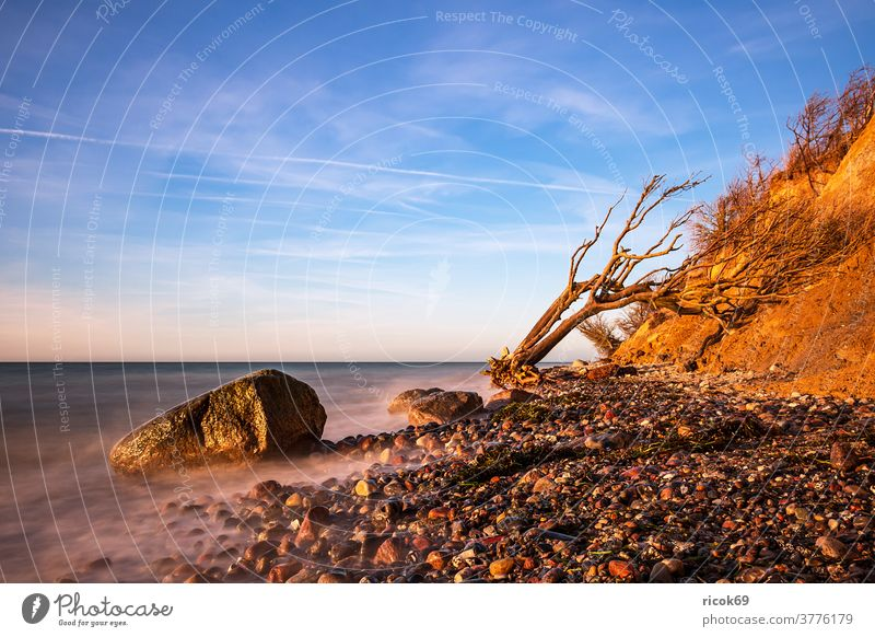 Abends an der Ostseeküste bei Wustrow Baumstamm Steilküste Fischland-Darss Mecklenburg-Vorpommern Meer Strand Küste Wasser blau Himmel Wolken Natur Landschaft