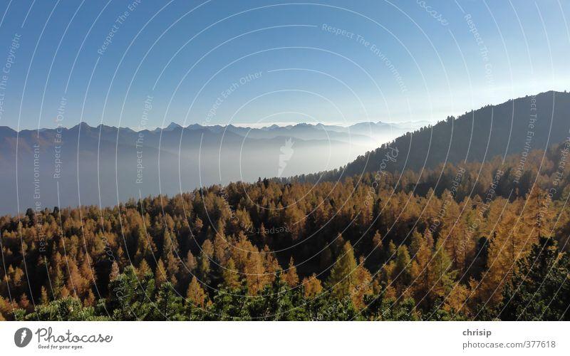 herbstln duats Umwelt Natur Landschaft Himmel Wolken Horizont Sonne Sonnenlicht Herbst Schönes Wetter Nebel Pflanze Baum Lärche Wald Hügel Alpen