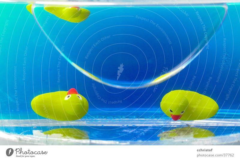 Alle meine Entchen gelb Seifenschale Bad Reflexion & Spiegelung Ente blau Wasser Statue