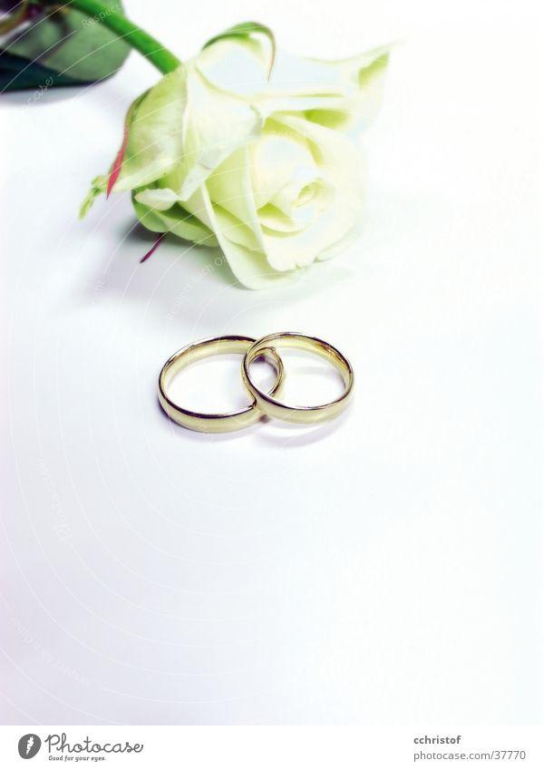 for ever weiß Liebe Blume Ring Hochzeit Rose Schmuck Valentinstag festlich Ehering