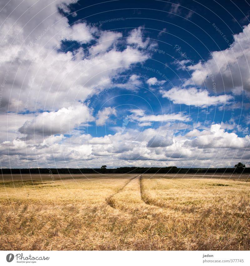 wo bleiben die mähdrescher? Landwirtschaft Forstwirtschaft Umwelt Landschaft Himmel Wolken Pflanze Nutzpflanze Feld Zeichen Wachstum Wärme blau gold Ferne