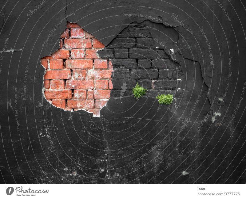 4eyes | wenn die Wand doch stärker ist als der Versuch, die Dinge anders ordnen zu wollen wand mauer backstein schwarz rot pflanze wachstum putz abgebröckelt