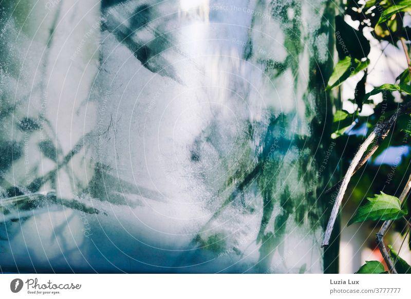 Licht- und Pflanzenmalerei: ein altes Pförtnerhäuschen wächst langsam zu, zerkratztes Glas, Sonnenschein und grüne Triebe ergeben ein Gesamtkunstwerk Kratzer