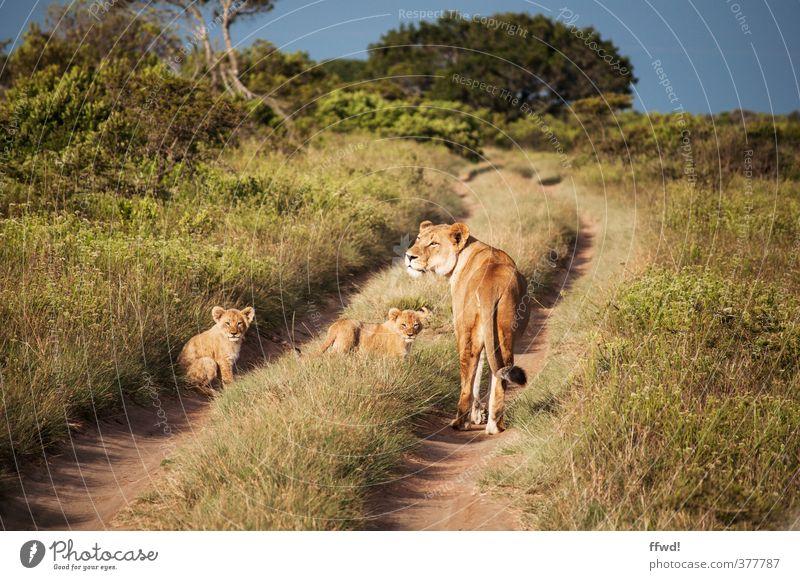 Miiietz Natur Ferien & Urlaub & Reisen Pflanze Landschaft Tier Ferne Tierjunges Wiese Gras Wege & Pfade Zusammensein Wildtier frei Sträucher beobachten niedlich