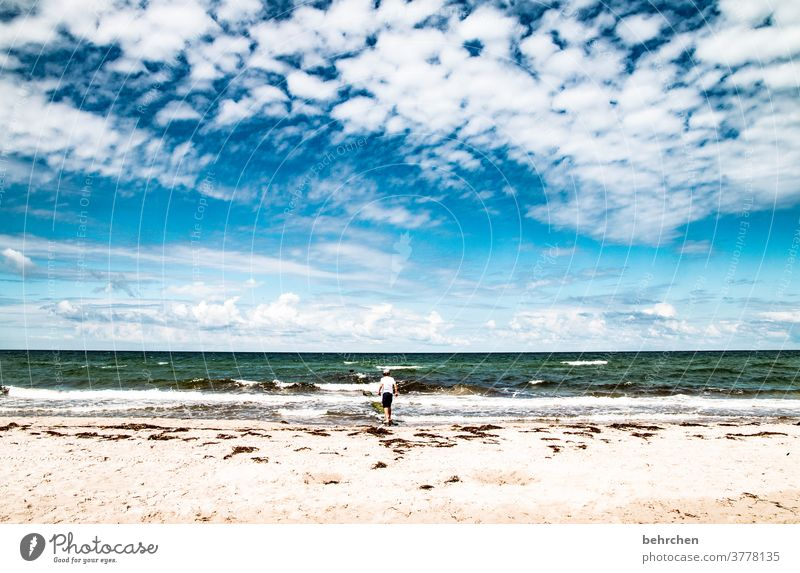 fluffig Erholung toben Spielen Deutschland Fischland-Darß Tourismus Kind Kindheit Sommer Mecklenburg-Vorpommern Ostseeküste Ferien & Urlaub & Reisen Natur