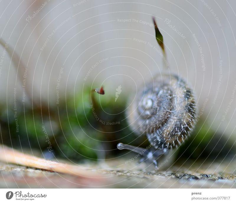 4mm Umwelt Natur Tier Wildtier Schnecke 1 blau grau grün stachelig Moos Farbfoto Außenaufnahme Menschenleer Textfreiraum oben Tag Schwache Tiefenschärfe