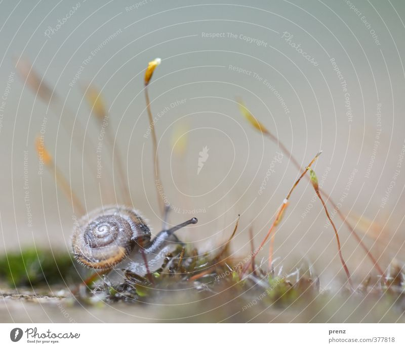 4mm - Schnecke auf Moos Natur grün Tier Umwelt grau klein Wildtier Moos Schnecke Fühler